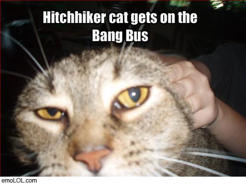 emo-animal-pictures-bangbus-cat