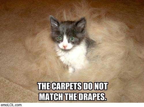 emo-animal-pictures-cat-carpet-drapes