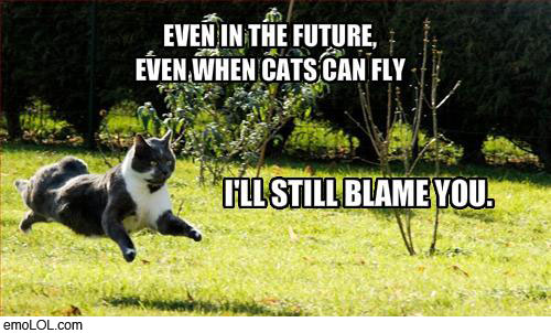 emo-animal-pictures-flying-cat-blame-you