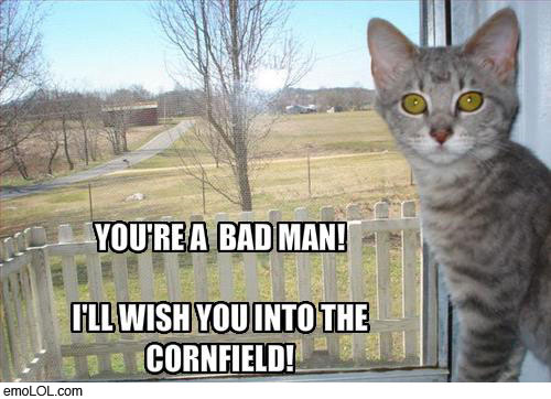 emo-animal-pictures-to-the-cornfield-cat